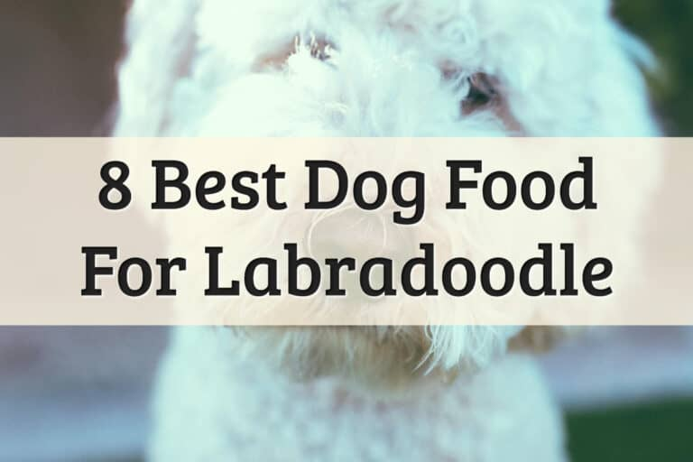 Recommendations Of The Best Labradoodle Food Feature Image