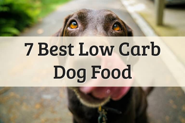 BestLow Carbohydrate Dog Foods Review Feature Image