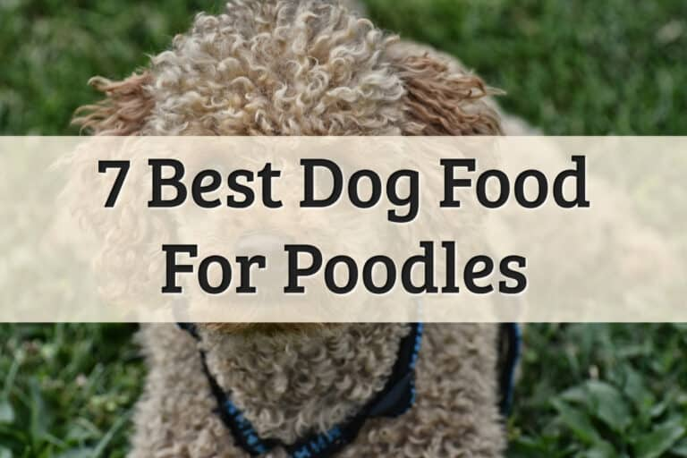 Best Poodle Food Review Feature Image