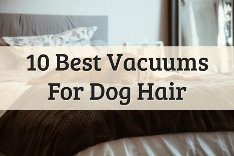 Top 10 Best Vacuum For Dog Hair Feature Image