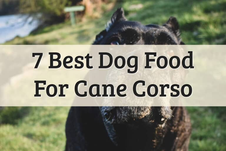 Recommendations Of Best Dry Dog Food For Large Breeds Like Cane Corso Feature Image