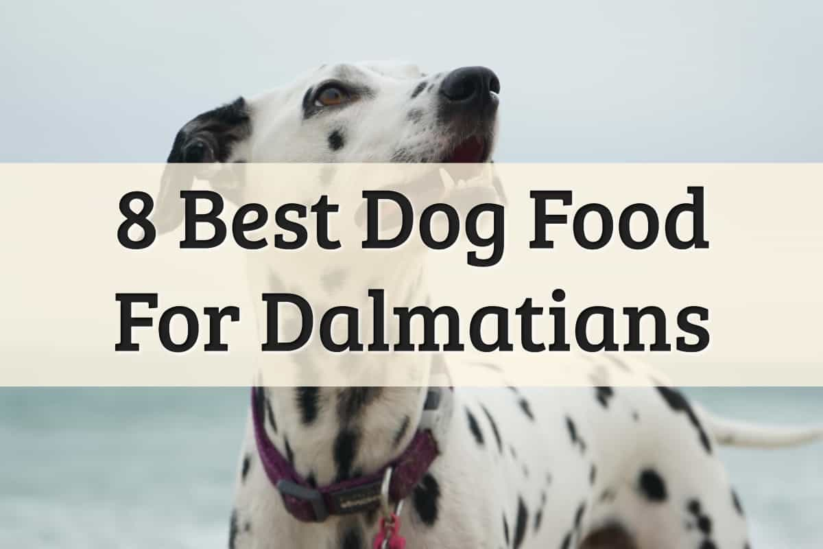Our Recommendations Of The Best Dalmatian Dog Food