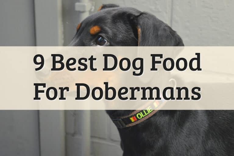 Best Dog Food For Dobermans Feature Image