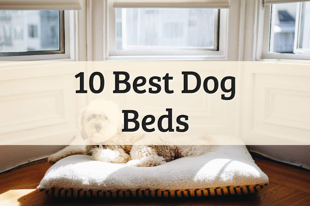 Best Dog Beds Feature Image