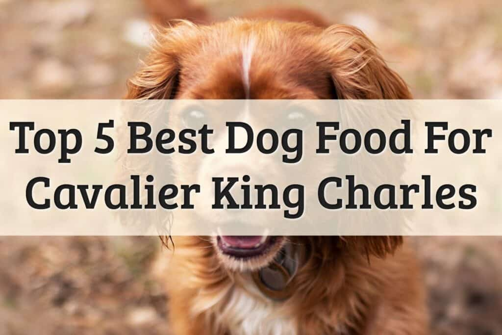 Picks for best dog food for Cavalier King Charles Spaniels features image