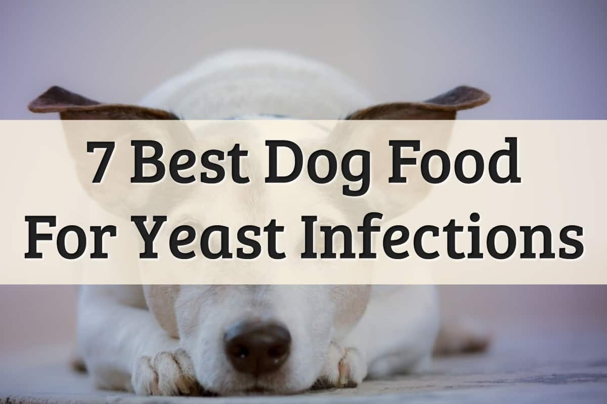 Our Recommendations On What To Feed When Dog Has A Yeast Infection Feature Image