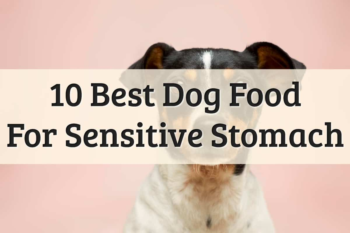 Best Dog Food For Sensitive Stomach Vomiting Feature Image