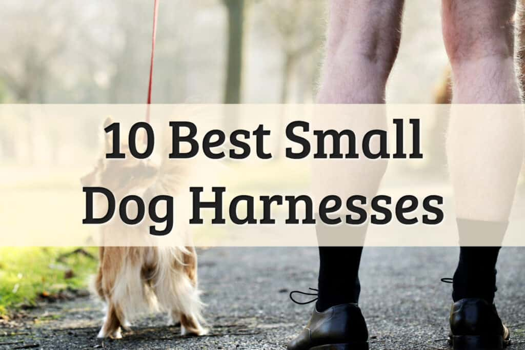 Dog Harnesses For Small Dogs Feature Image