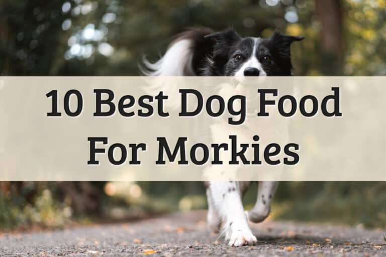 Best Food For Adult Dogs Morkie - Feature Image