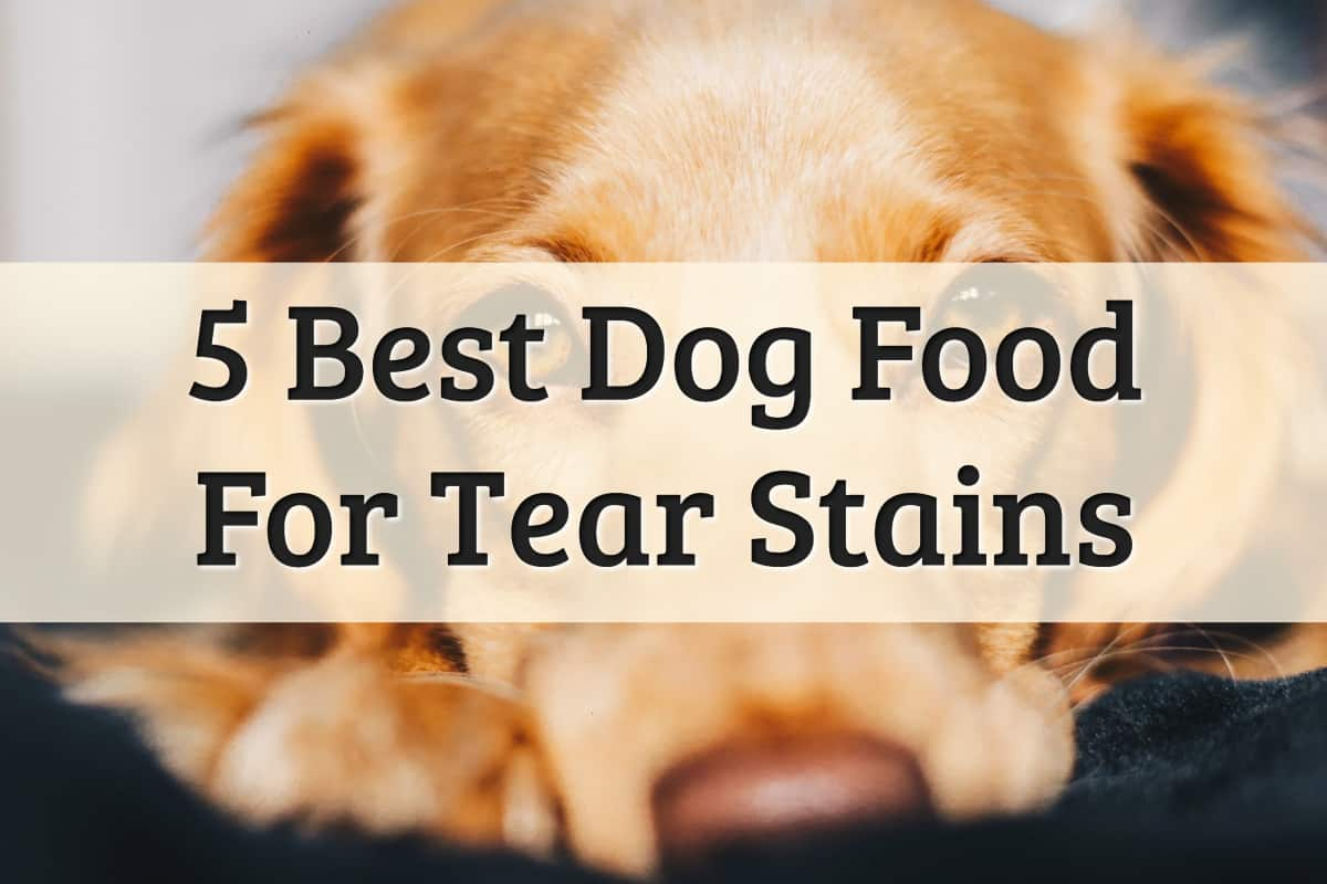 Best Dog Food For Tear Stain Feature Image