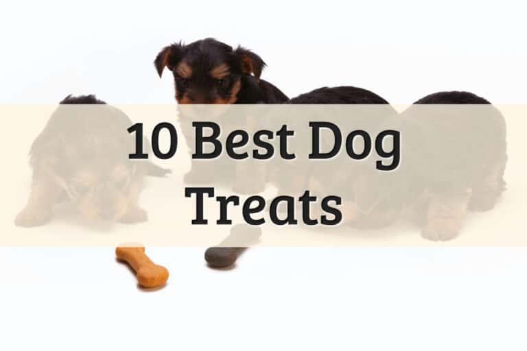 Dog Treats Feature Image