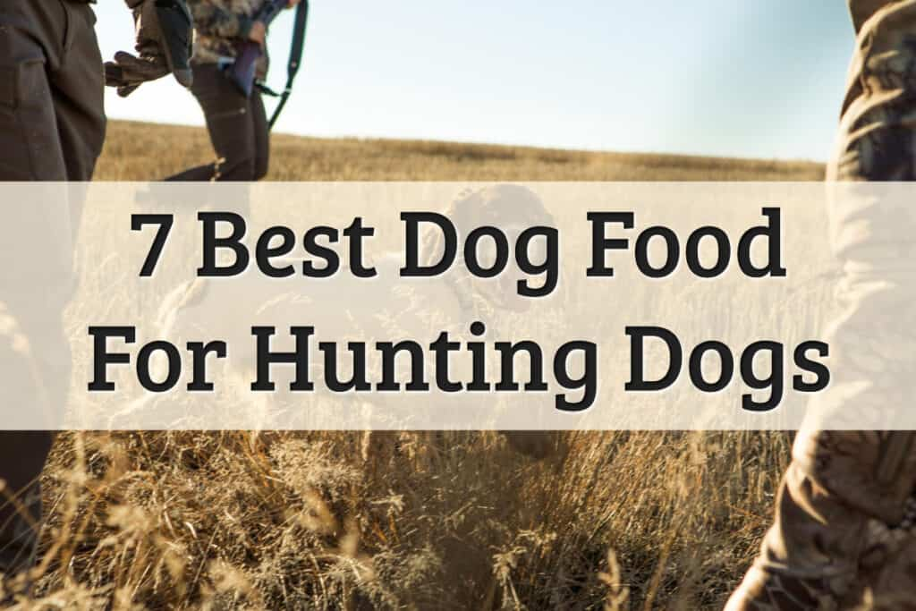 Hunting Dog Food Feature Image