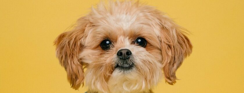 Reasons and consideration for choosing the pet products - ingredients