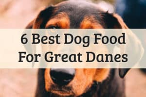 Best Dog Food For Great Danes - Feature Image
