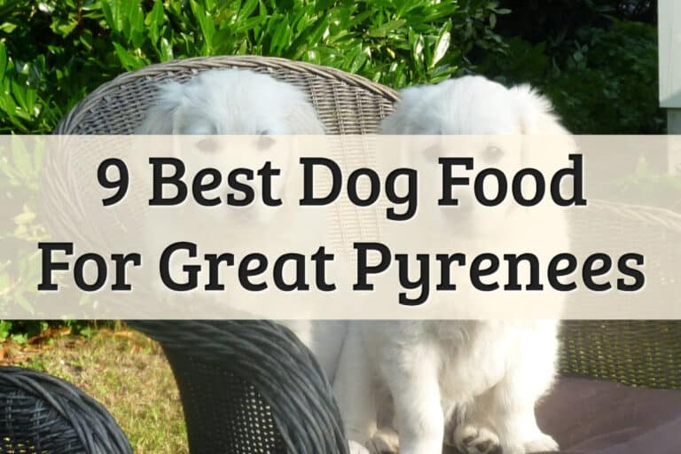 Our Recommendation Of The Best Dog Food For Great Pyrenees Feature Image
