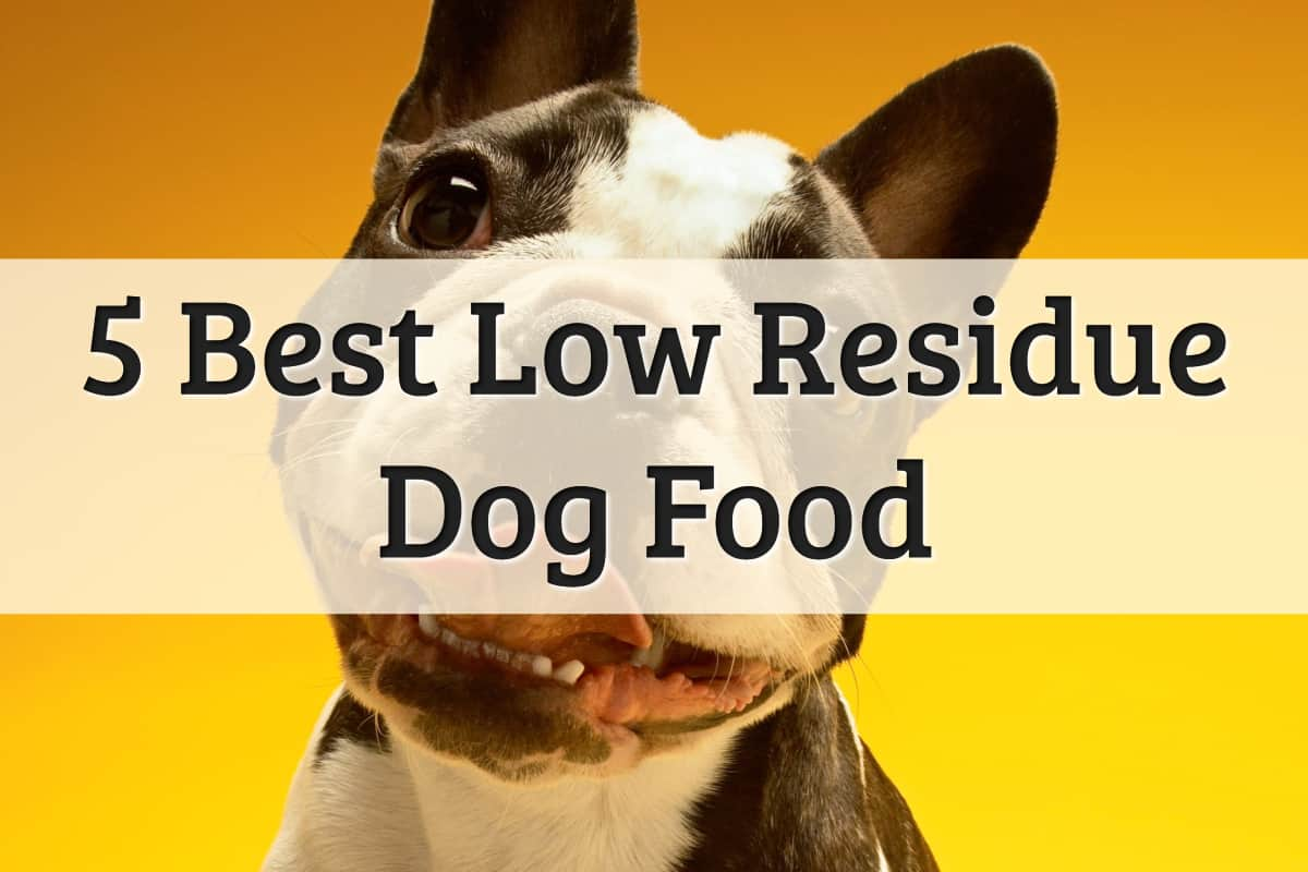 Best Food For Dogs With Lesser Residue Feature Image