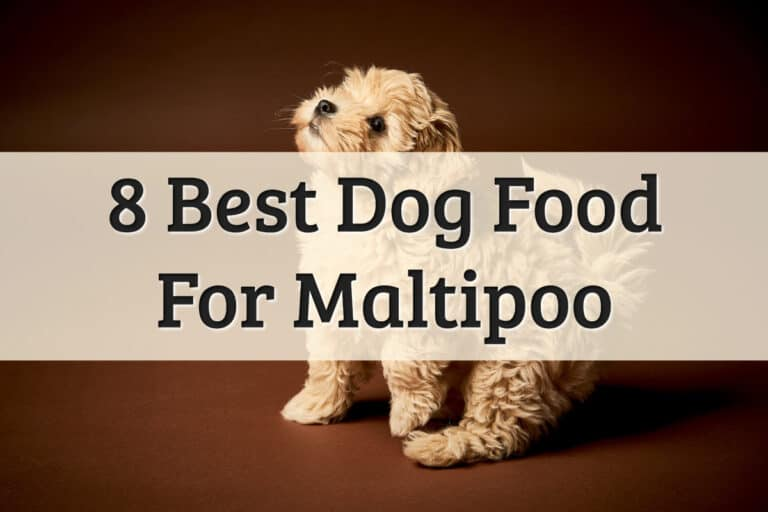 Our Recommendations Of Maltipoo Food Feature Image