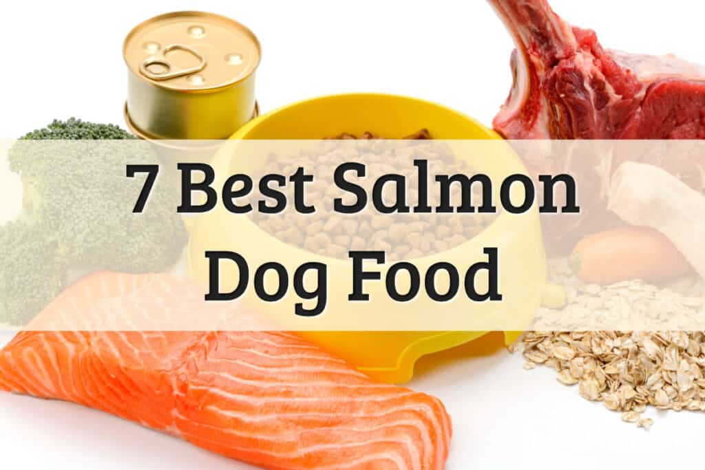 Best Salmon Dog Food Feature Image