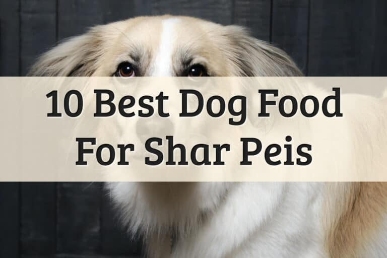 Best Dog Dry Food For Chinese Shar-Pei - Feature Image