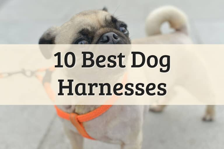 Top 10 Best Dog Harness Review Feature Image