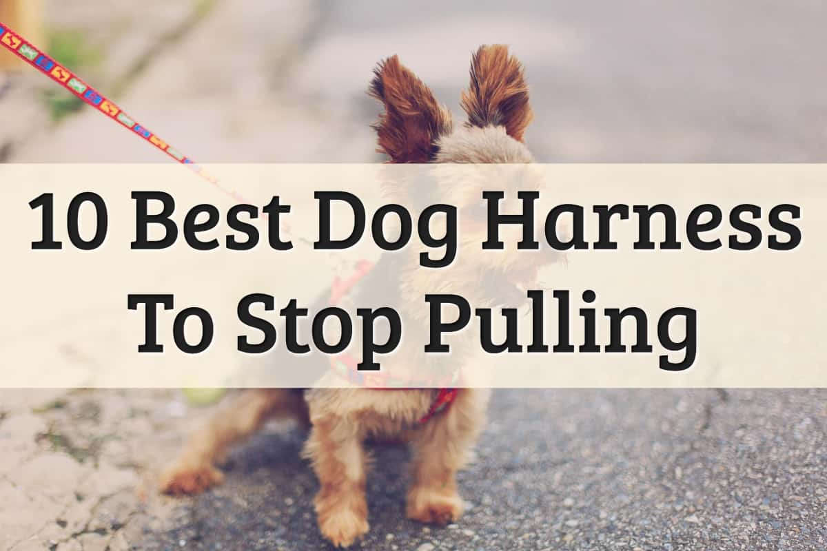 Top 10 Best Dog Harness To Stop Pulling Feature Image