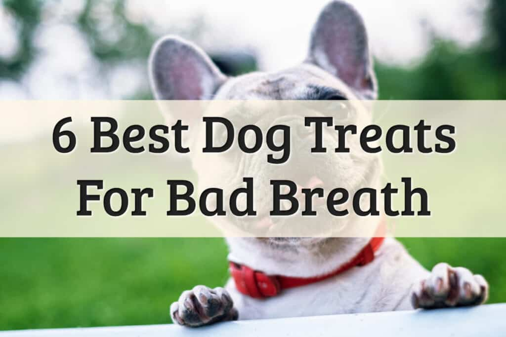 best dog treats for bad breath review options - feature image