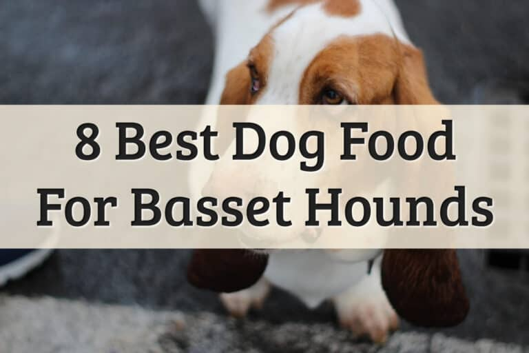 Best Royal Canin Basset Hound Food Dog Food Reviews Feature Image