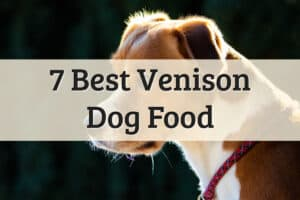 venison dry dog food brands review and suggestions - feature image