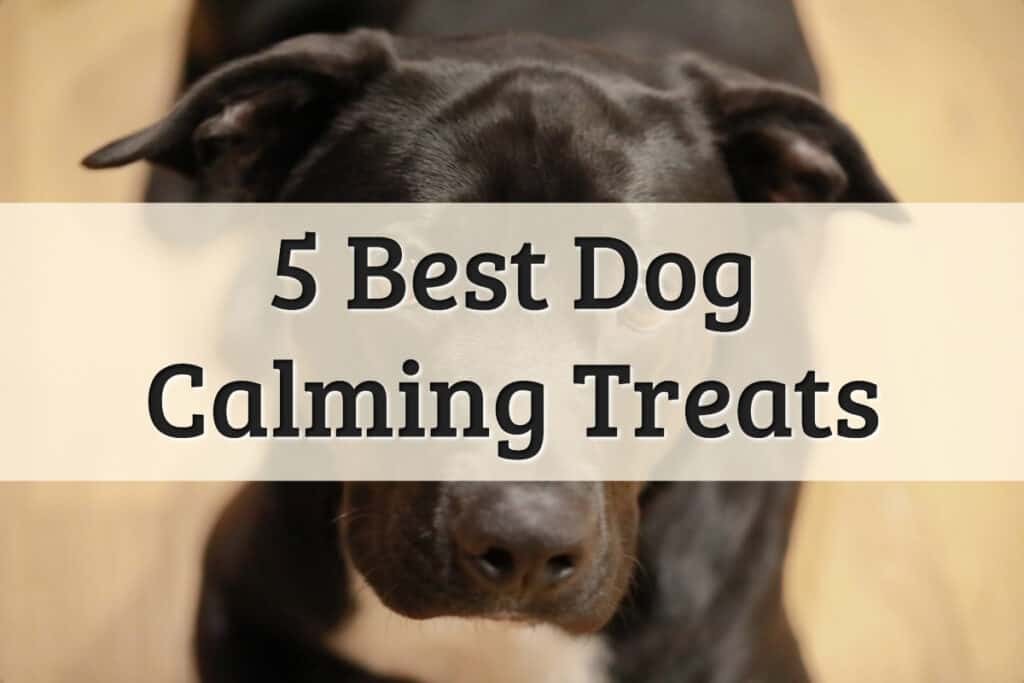 calming treats for dogs recommendations - feature image