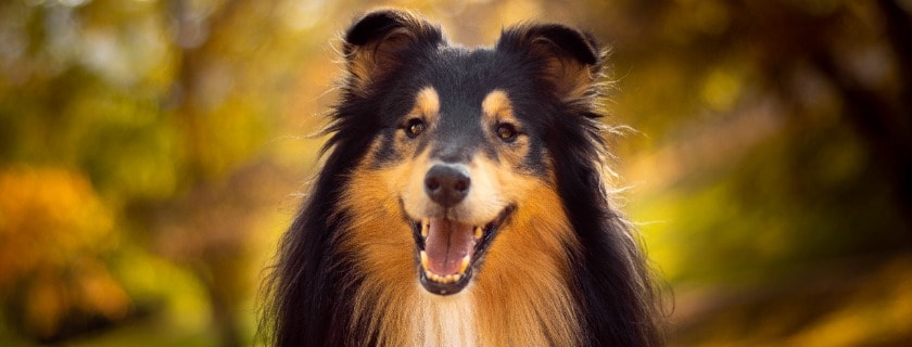 levels and amount of vitamins, niacin in dog venison food product - needs for food allergies dogs