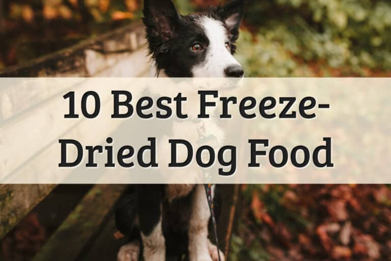 best freeze-dried dog food - feature image