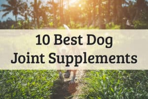 best dog joint supplements recommendations - feature image