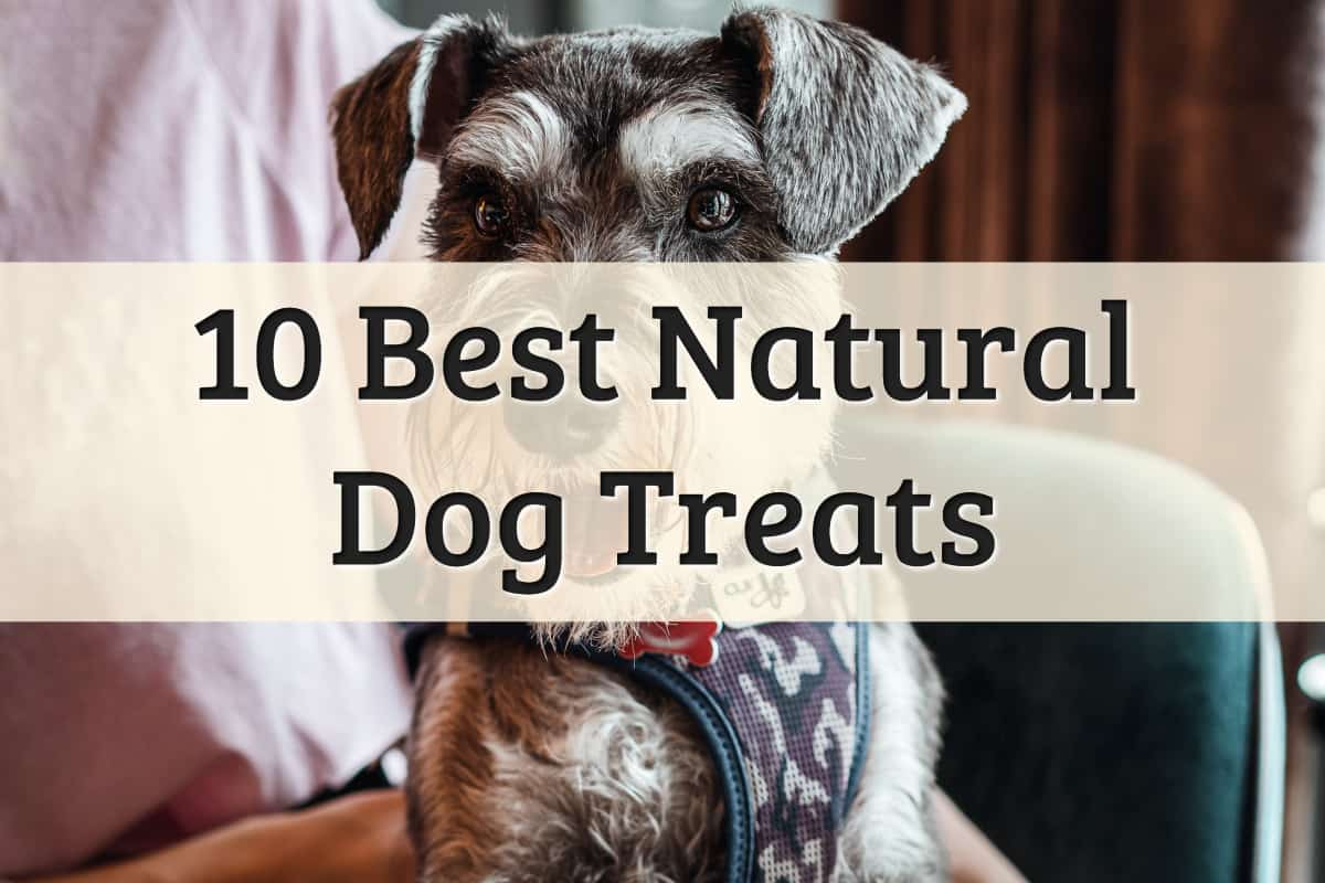 best all-natural pet treats dogs review - feature image