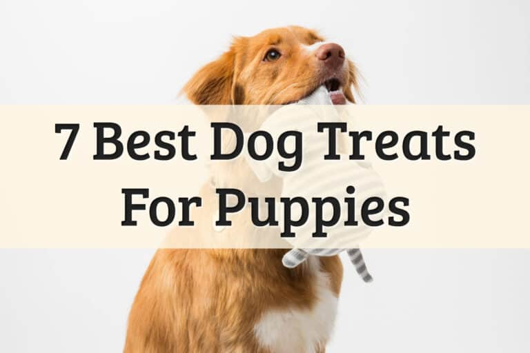 best puppy treats brand recommendations - feature image