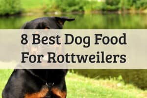 Best Foods For Rottweiler Review - Feature Image