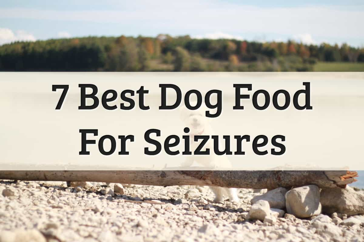 best dog food for dogs with seizures; brands for dog parents - feature image