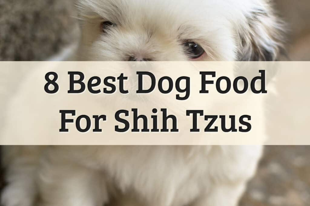 best dog foods for small breed Shih Tzu dogs - feature image