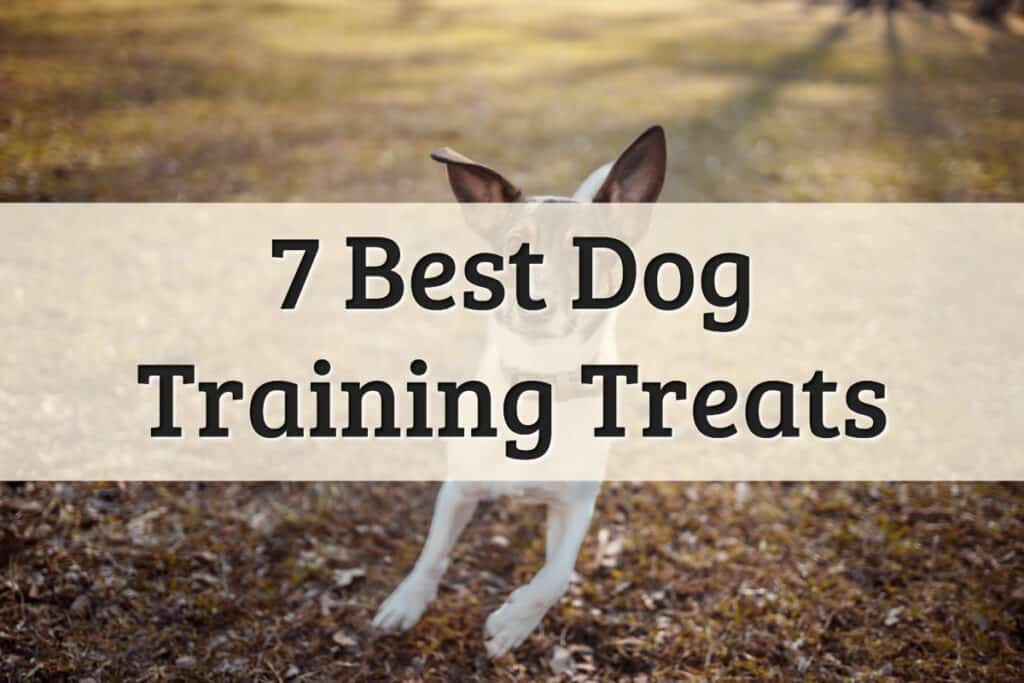 top choice for the best dog treats for training brands - feature image