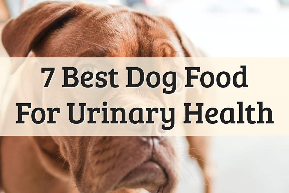 top picks for best dog foods for urinary health issues - feature image