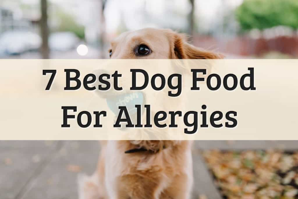 dog food best for allergies review - feature image