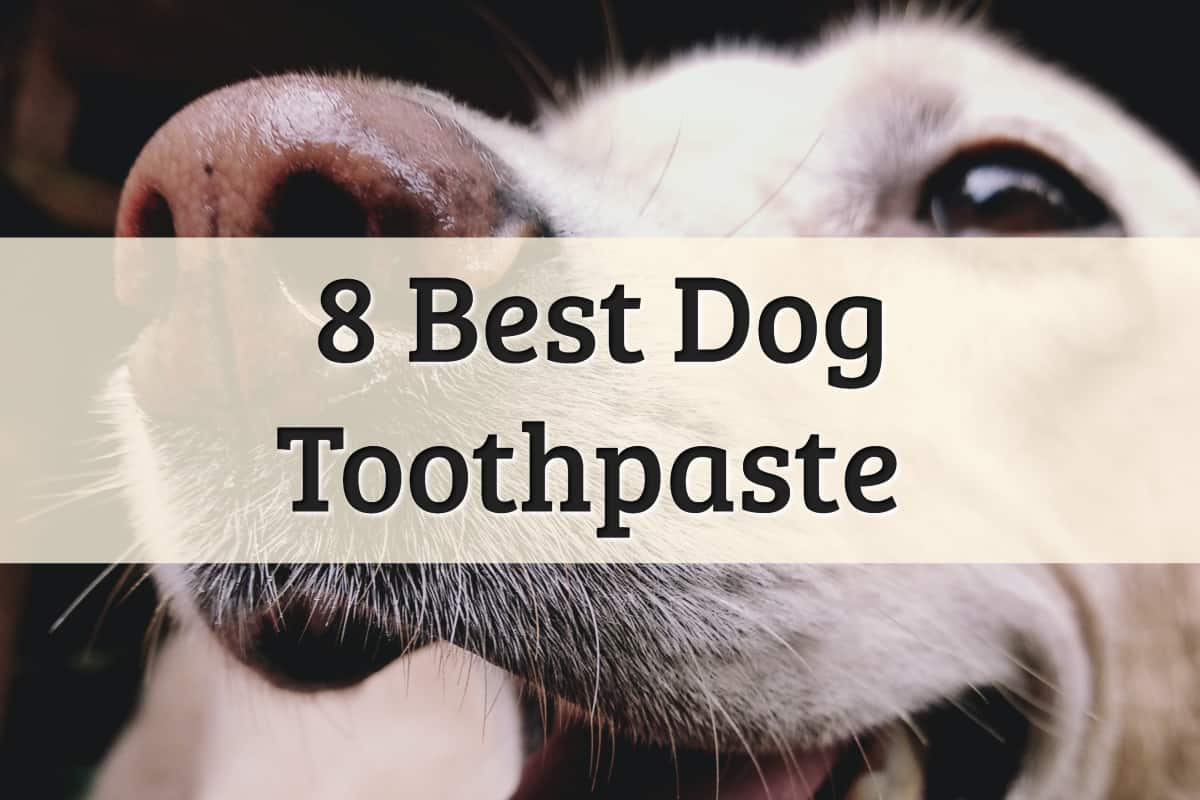 best toothpaste for dog dental health review - feature image