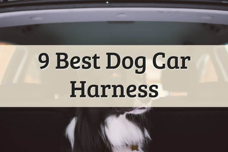 top dog car harnesses products recommendations - feature image