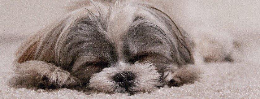 things to take note looking at your dog's behavior and movements when sleeping
