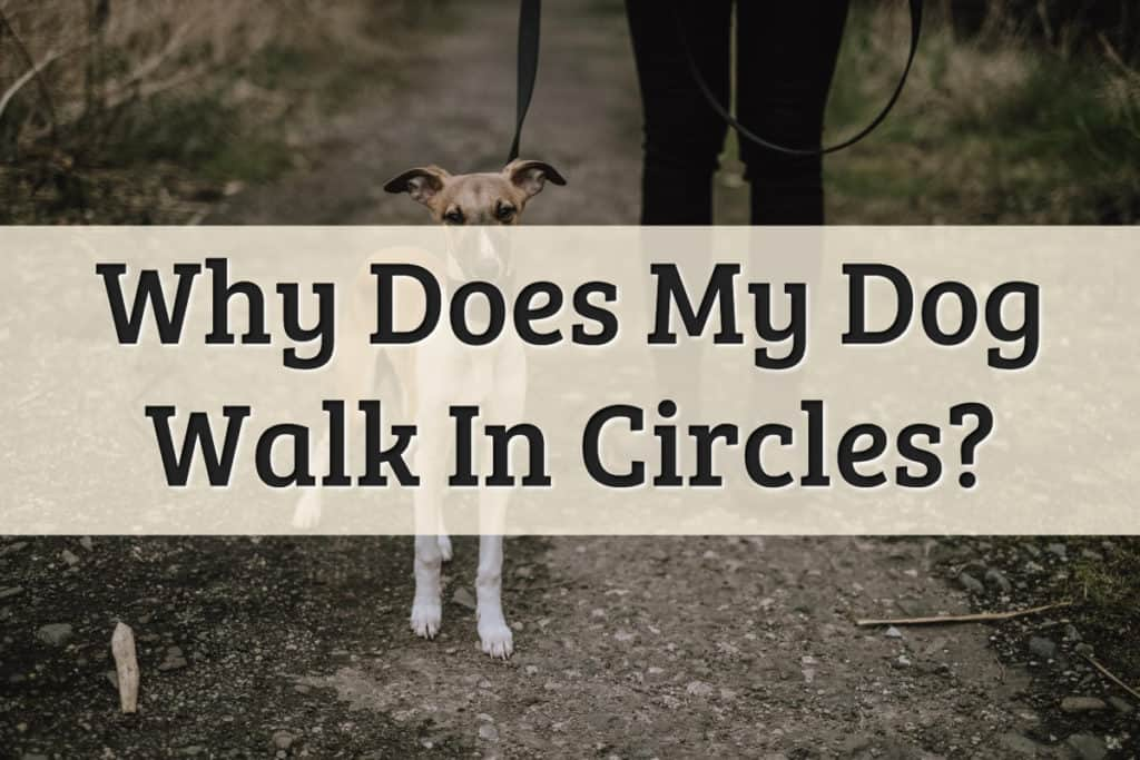 factors for why a dog is walking in circles - feature image