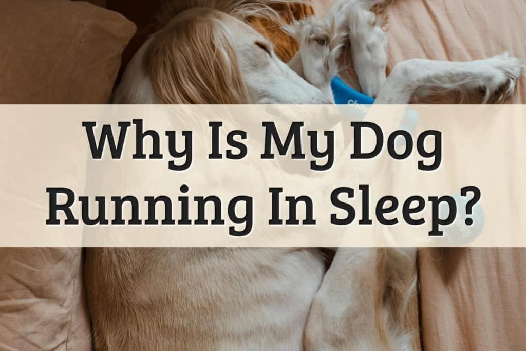 dog running in sleep information - feature image