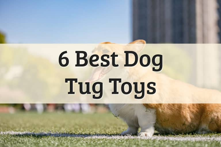 best tug toys for dogs - feature image