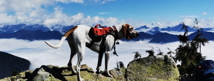 options for hike activities - follow guidelines and ensure best behavior