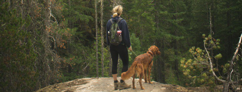 training leash and attachment points benefit pets and have advantages