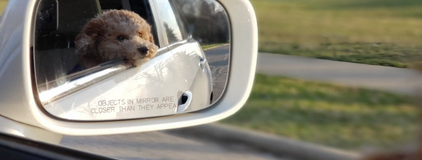 tips for choosing the best car harnesses including for small dogs with seat belt for dog