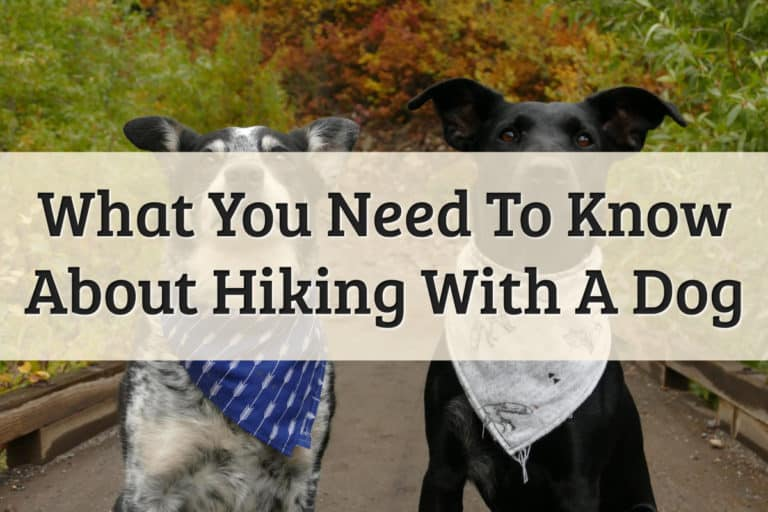 guidelines for hiking with my dog - feature image